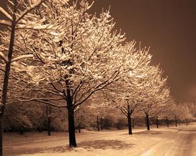 a-quiet-snowy-nightblog