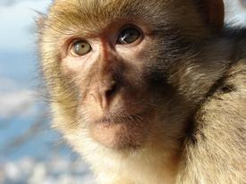 orangutanblog
